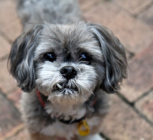 My dog - Rosie