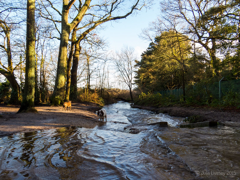 The stream was flooded after all of the overnight rain