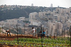 Bil'in is a farming village! We resist occupation by planting and caring for our land!