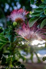 Sparkly Monkey Pod Flower