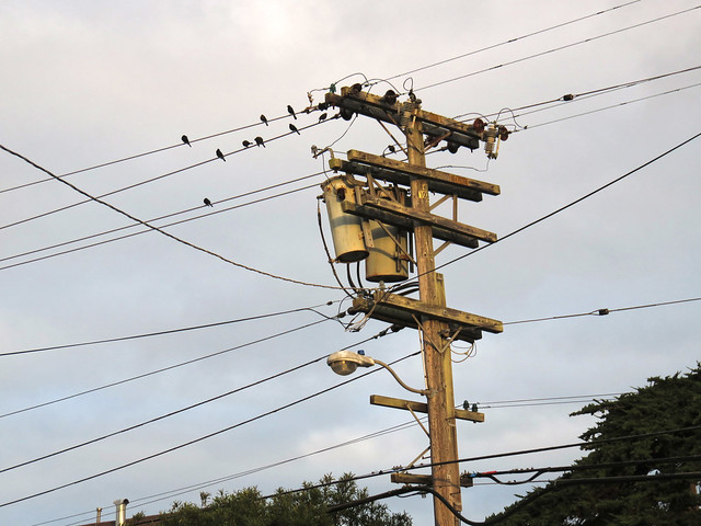 electricity lines, transformer, birds, morning (2014)