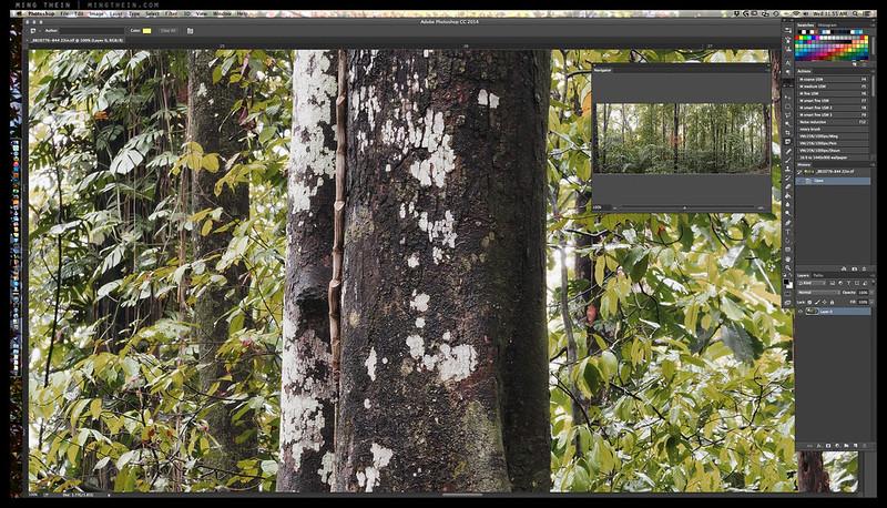 _8B10776-844 forest iv crop