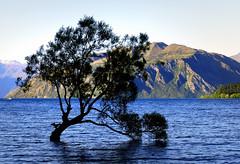Lone tree Lake Wanaka. NZ