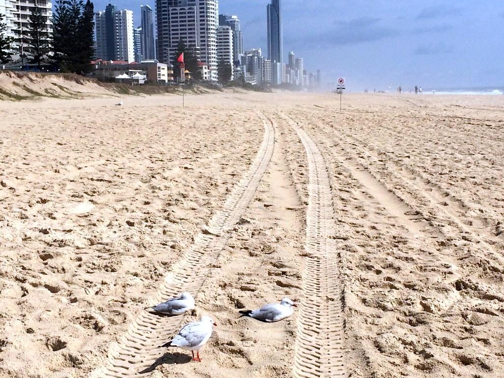 the beach - surroundings of sofitel gold coast-006