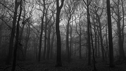 wood trees mono woods fujifilm wgc xpro1 sherrards 18mmf2 gor44