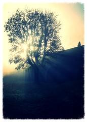 Autumn Light mk II