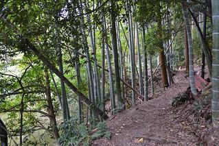 Fushimi Inari Shrine Forest