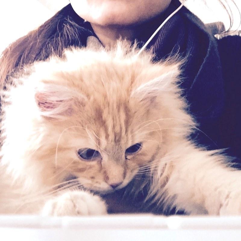 Sintra is a tech savvy kitten