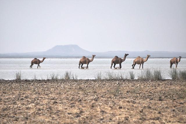 Banni Grasslands
