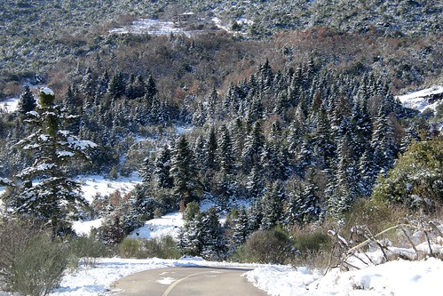 trees winter mountain snow weather landscape hellas greece snowscape centralgreece fthiotis mountscape greekcountryroads