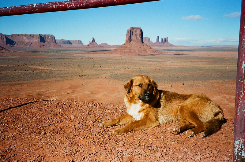 Monument Dog.
