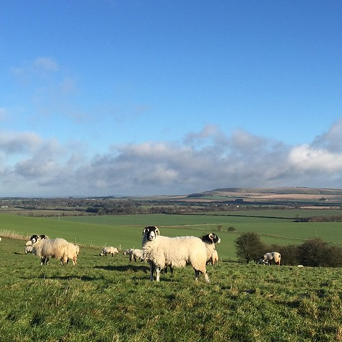 The sun eventually broke through to reveal a marvellously beautiful Wiltshire winters day.