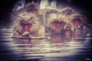 Snow monkeys #Winter