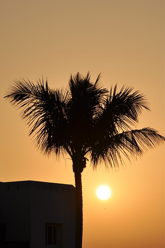 light sunset sun sunlight solitude desert middleeast peaceful simple oman salalah dhofar desertscene arabianpeninsula