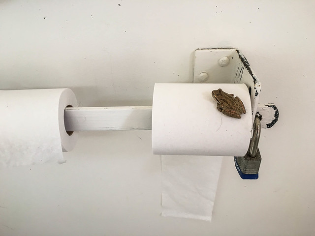 Surprise Froggy - Drakes Estero bathroom