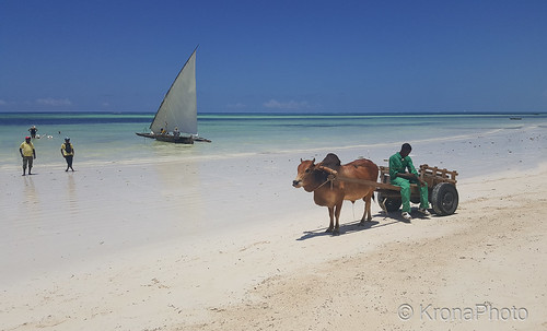 tanzania zanzibar africa beach strand people work clean animal dyr water sea view utsikt