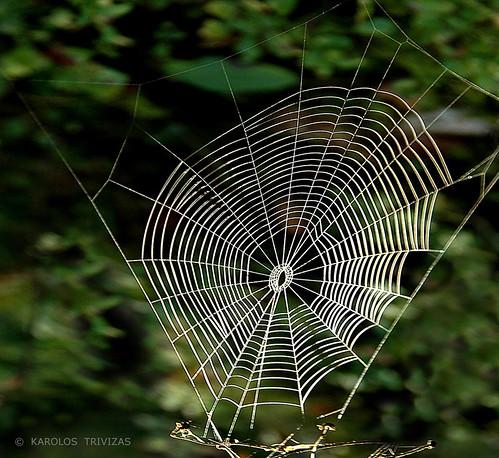 SPIDER'S TRAP (AUSTRIA, CARINTHIA, SPITTAL AN DER DRAU, OBERAMLACH)