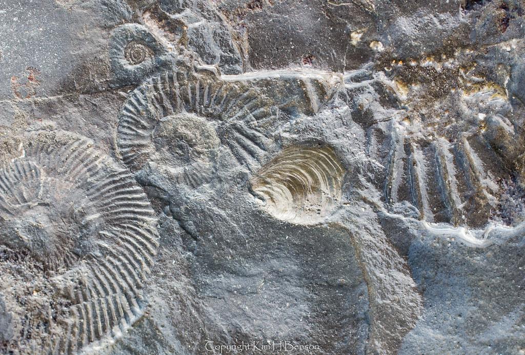 Prehistoric Rock Formations At Jurassic Coast