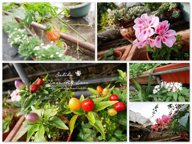 內湖採草莓圃咖啡下午茶 (28)