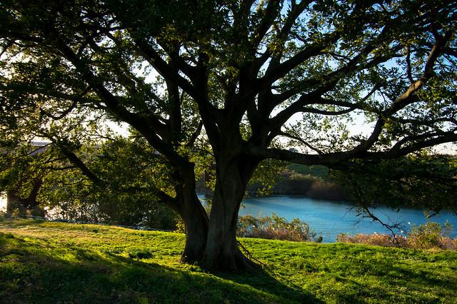流れのほとりに植えられた樹