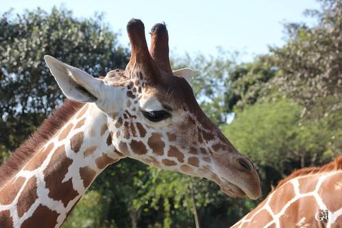 Zoo Miami 14.11.2014 73