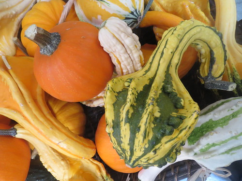 fall harvest pumpkins and squash