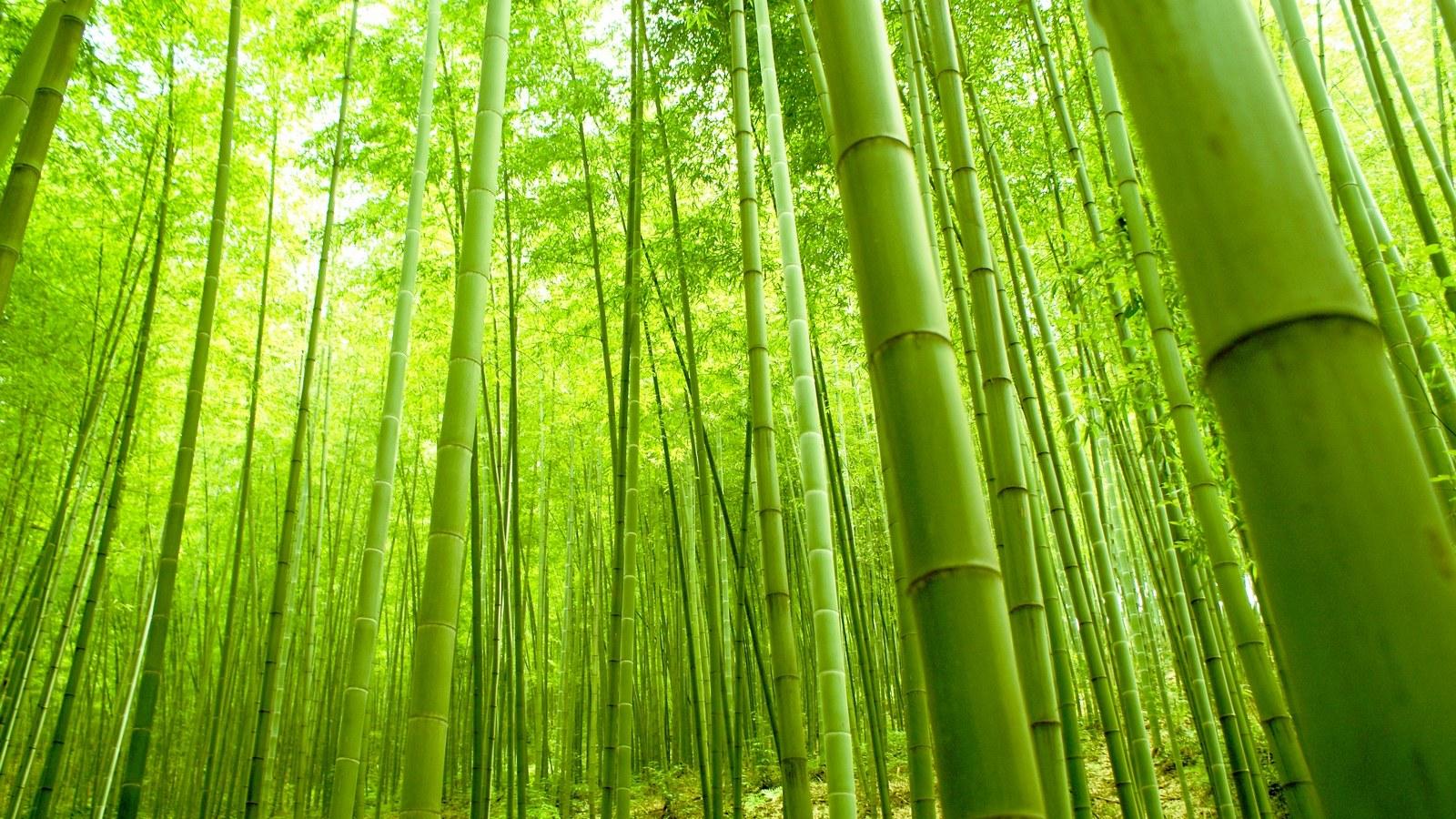 Bamboo Garden Fence Outdoor Privacy