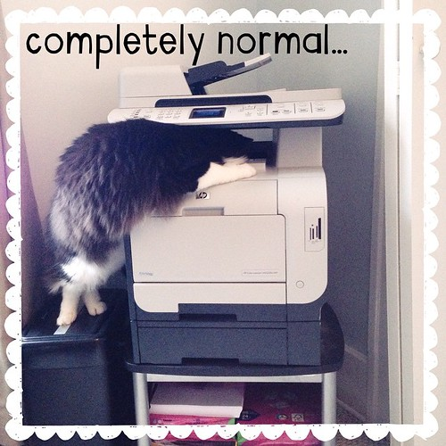 November 12 - Normal