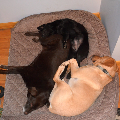 dogbed puppy puzzle