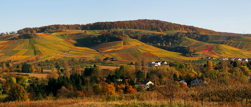 Rolling Hills - Landscape in Autumn