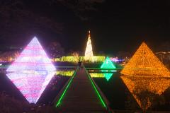 Light Decoration in Ashikaga Flower Park