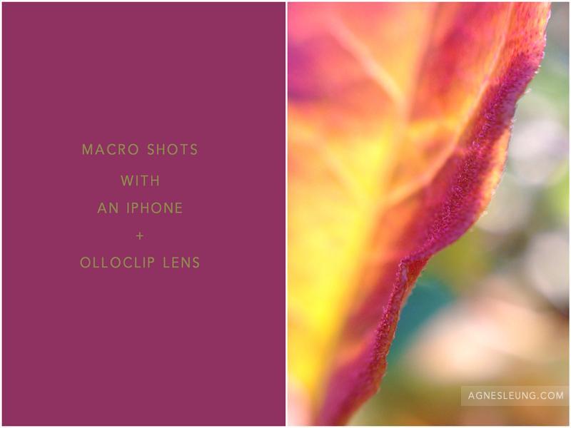 macro-olloclip1-800px