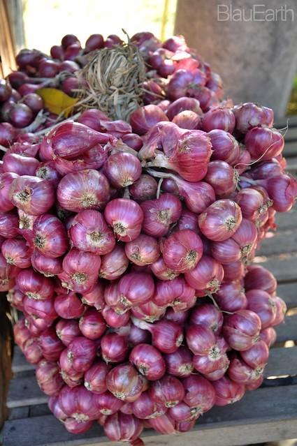 Ilocano Onions