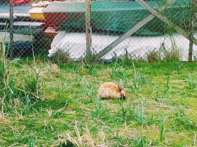 If it looks like a rabbit, and it hops like a rabbit