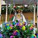 Romería de la Virgen de Guadalupe