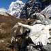 Langtang Trek - day 5 by Rick McCharles