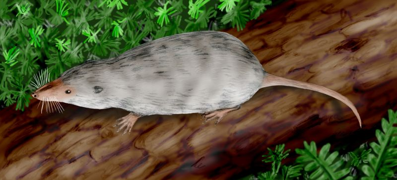 Depiction of Adelobasileus