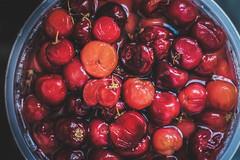 lingonberry jam(0.0), frutti di bosco(0.0), produce(0.0), cranberry(0.0), zante currant(0.0), cherry(1.0), berry(1.0), fruit(1.0), food(1.0),