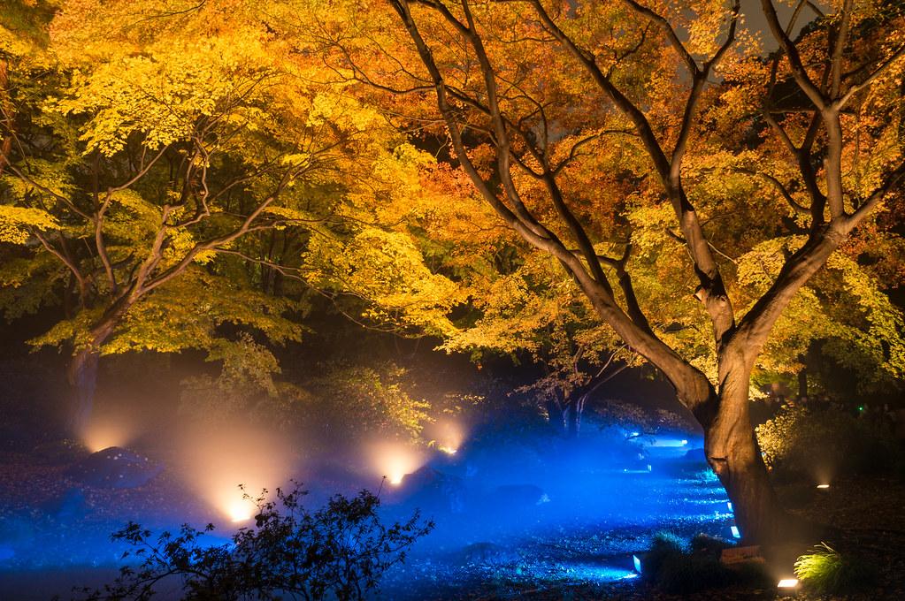 六義園 紅葉 『水香江』
