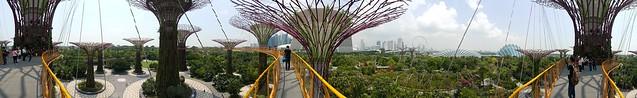 ภาพพาโนรามาแนวนอนจาก Super Tree Groove ที่ Garden by the Bay สิงคโปร์