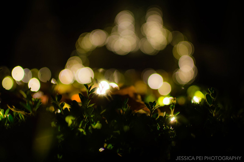 Christmas Lights Bokeh Garden Glow St. Louis