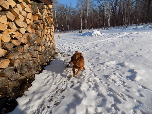 winter snow home dogs