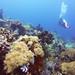 Panjang Reef   Moyo Island by adiaphane