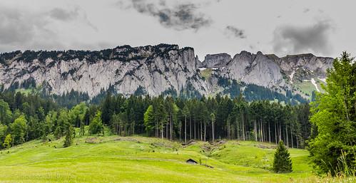 schweiz appenzellerland naturnature appenzellinnerrhoden schwende bäumetrees landschaftspanoramalandscapepanorama berglandschaftmountainlandscape