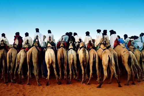 Kamele von hinten_青