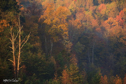 autumn fall forest landscape kentucky cumberlandforest alfredjlockwood