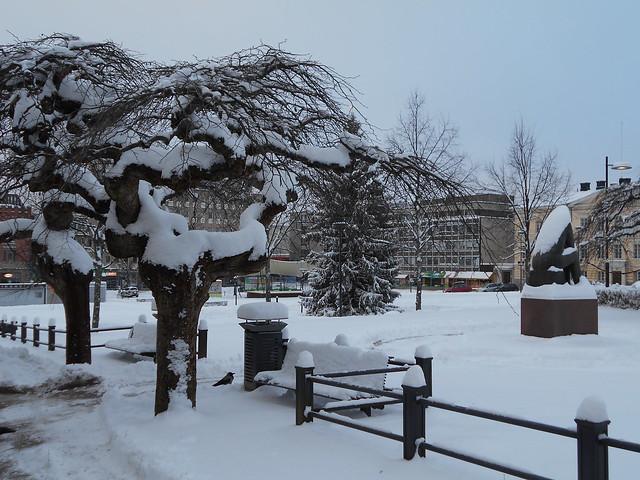 "Lumiset sateenvarjojalavat (Ulmus glabra ""Camperdownii"") torilla 25.12.2014 Hämeenlinna"