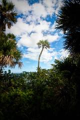 Palm Tree at Castaway Point Park