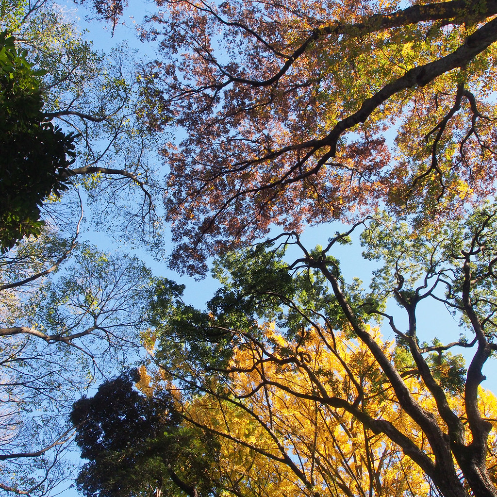 明治神宮代々木神園町 Meiji Shrine forest