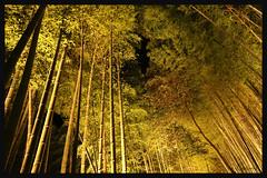 日本京都-嵐山夜燈.14